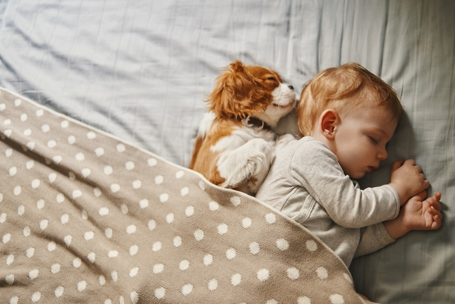 Baby and dog sleeping in good indoor air quality in West Chicago, IL.