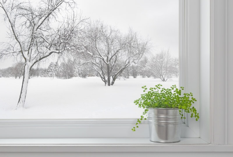 Winter landscape seen through the window, and green plant on a windowsill.